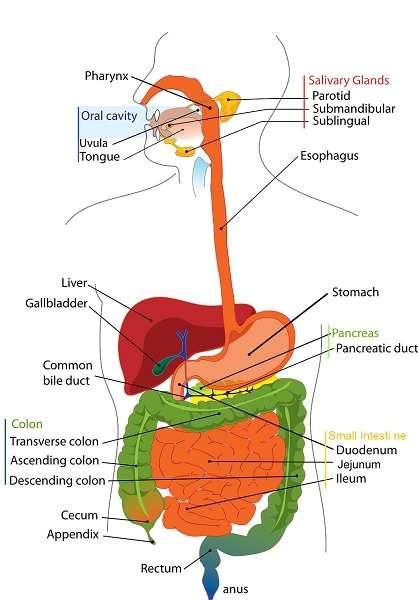 Processo di digestione